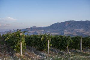 Вино Виноградники Плантации
